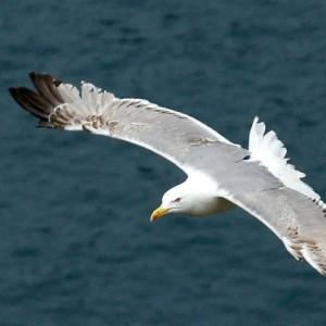 Appeal to Khateebs – Breaking My Wings